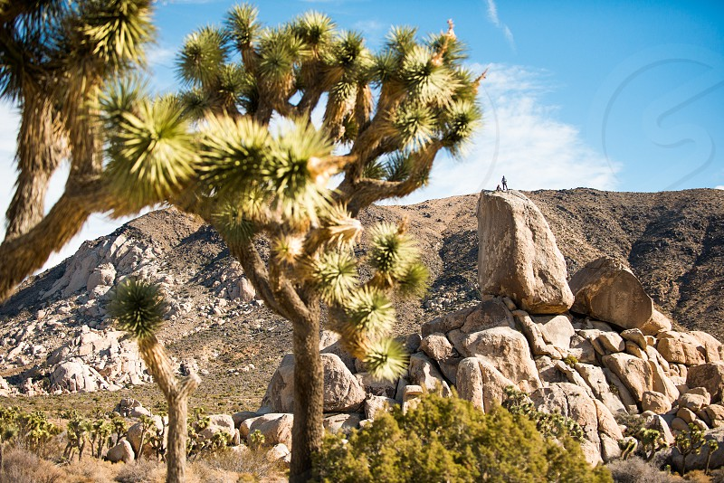 Climbers on top of a rock formation in Joshua Tree National Park California. photo