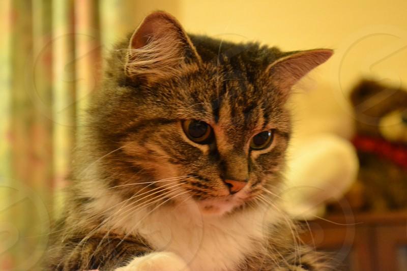 Happy Curious Cat photo