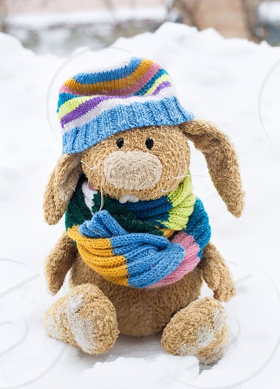 Cute rabbit in hat and scarf winter snow toy thread knitting love street amazing seasons pretty  photo