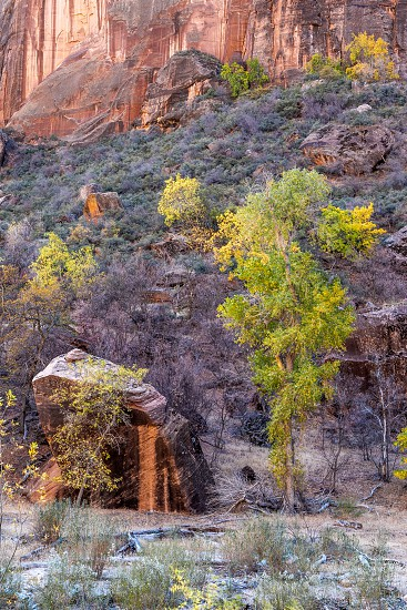 Trees and Boulders in Zion National Park photo