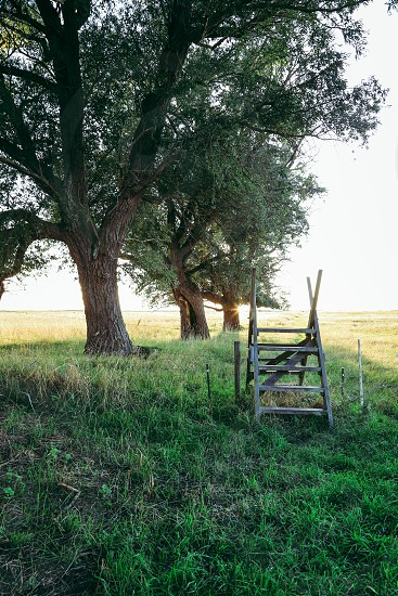 Sweden landscape  grass green field ladder outdoors nature  tree photo