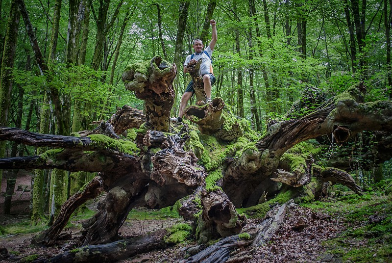 low angle photo of man standing on driftwood with moss and background of green leaf trees photo