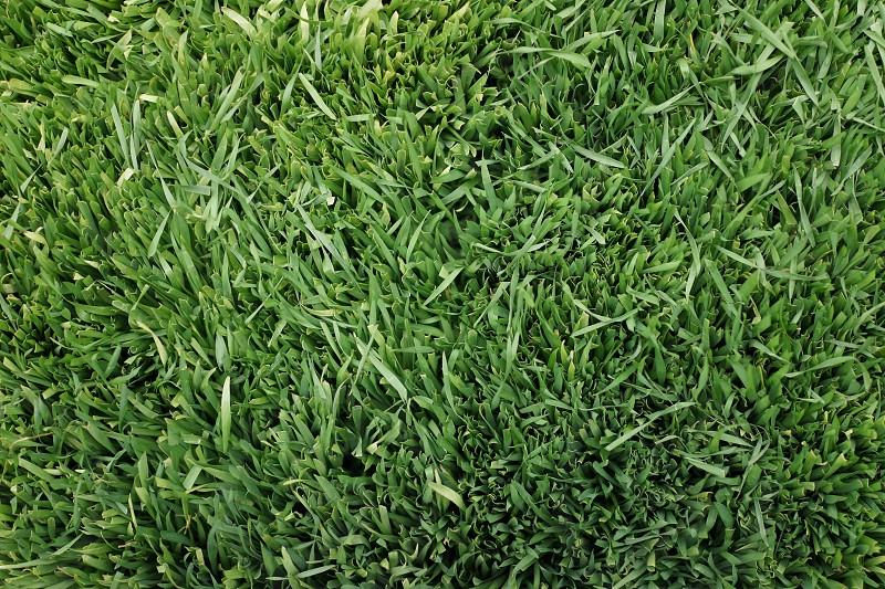 Grass texture.  photo