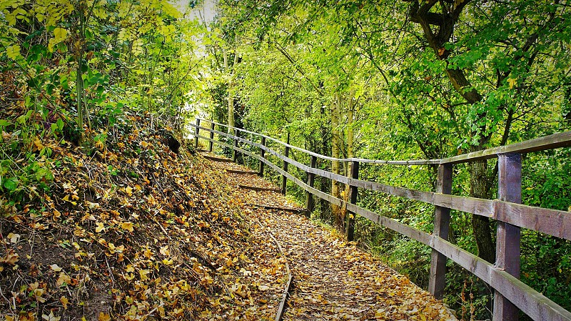 leafy dirt path with brown wooden fence under green tree arch way \ photo