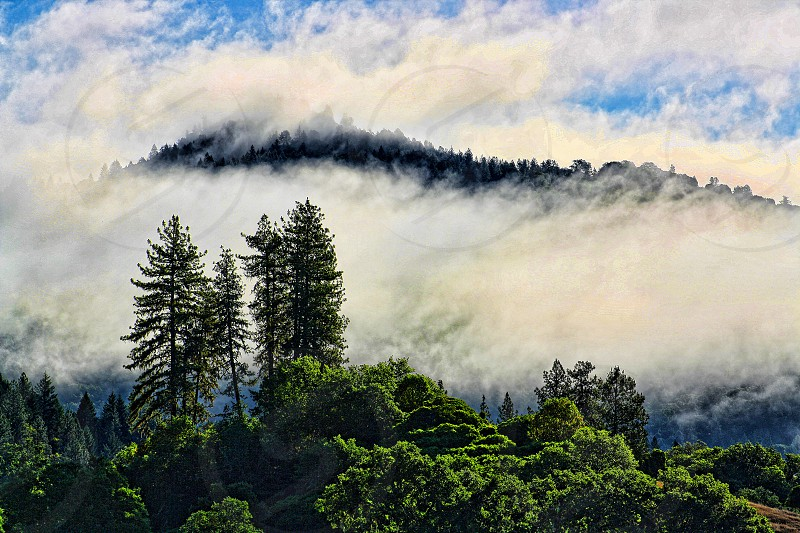foggy pine tree covered mountains photo