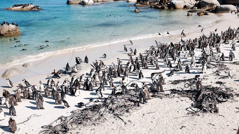 Beauty beach cliff africa south gorgeous rocks blue light blue pretty vista view ocean foam wave sun day bright daylight rocky penguin gangsta penguin the best photophotography photo