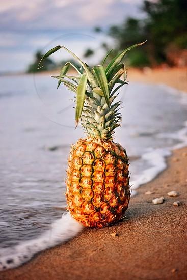 A family-friendly beach in Maui Hawaii photo