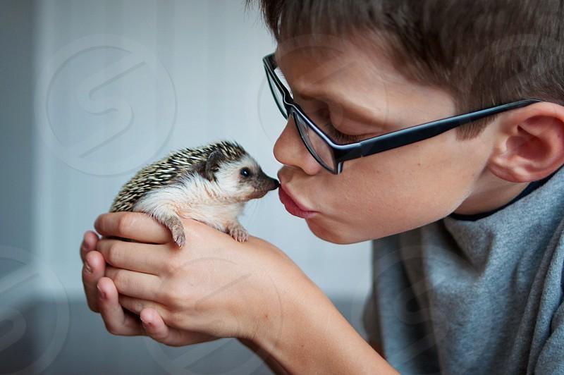 hedgehog pet boy kiss animals photo