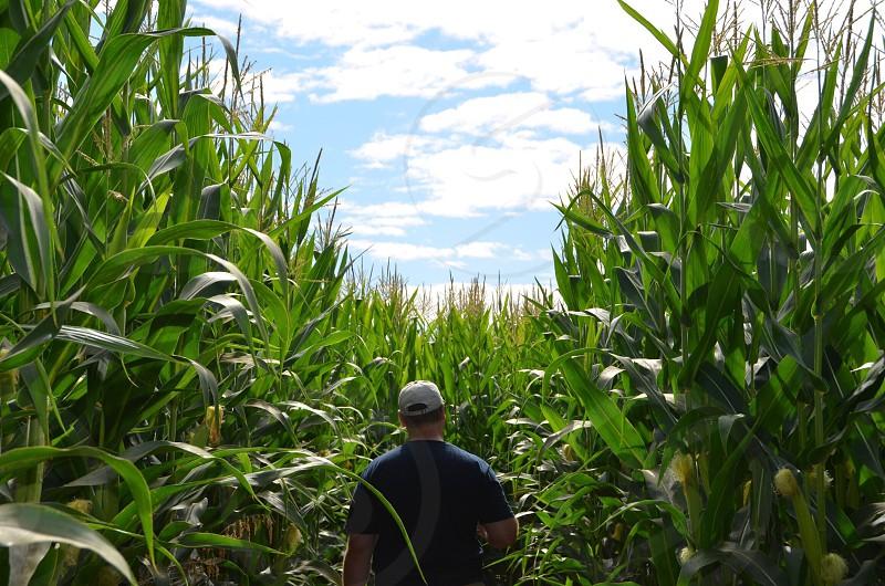 Farming corn lifestyle  photo