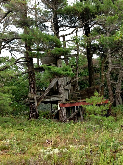 broken down treehouse photo