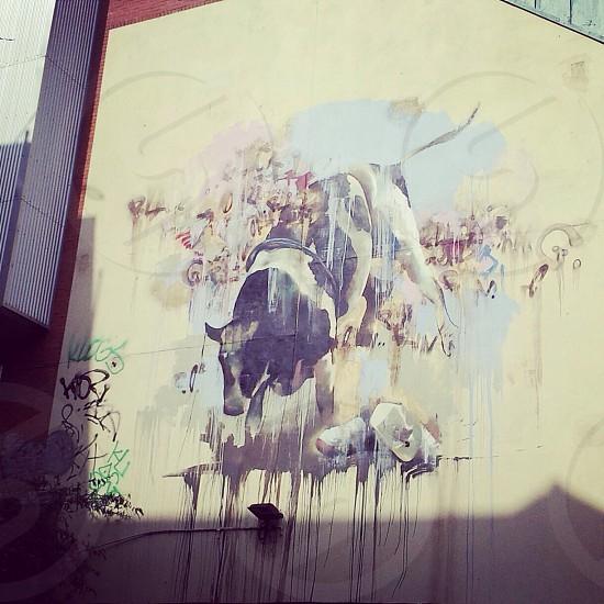 black and white cow graffiti art photo