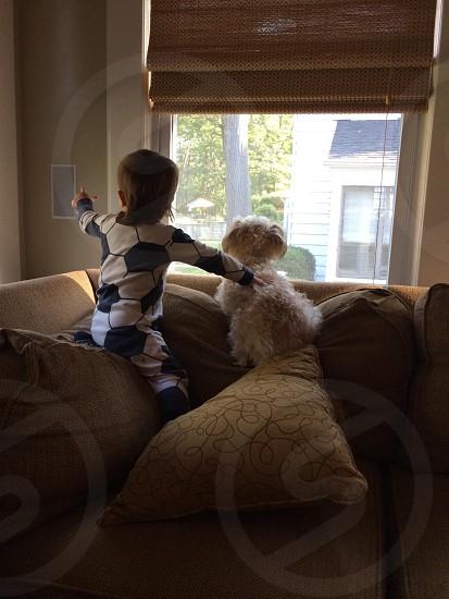 cream curly coated small dog facing window photo