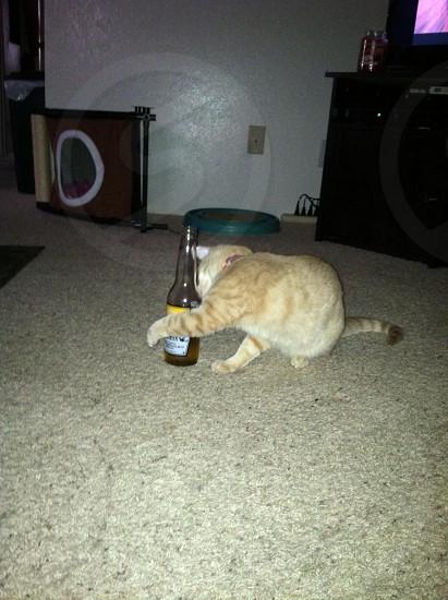 Yo quiero cerveza! photo