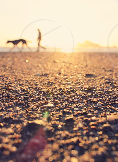 man walking with a dog photo