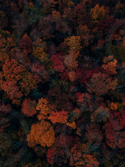 Leaves colours fall autumn trees drone aerial photography  photo
