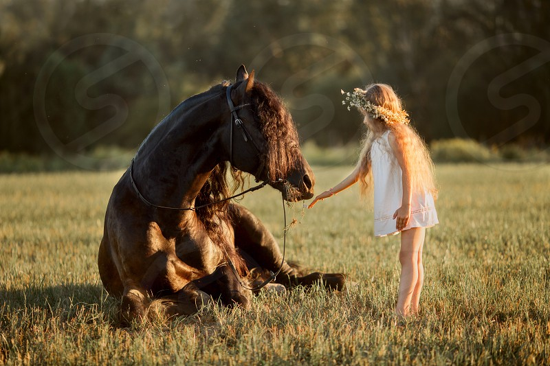 Little girl with black fresian stallion in summer evening  photo