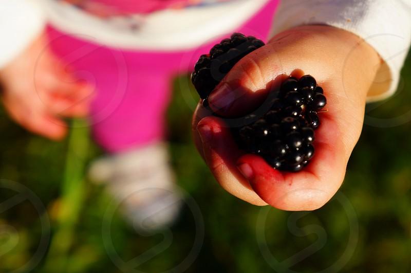 Picking blackberries... Picking fruit is something little kids do. Brings back lots of memories of my own childhood. :) photo