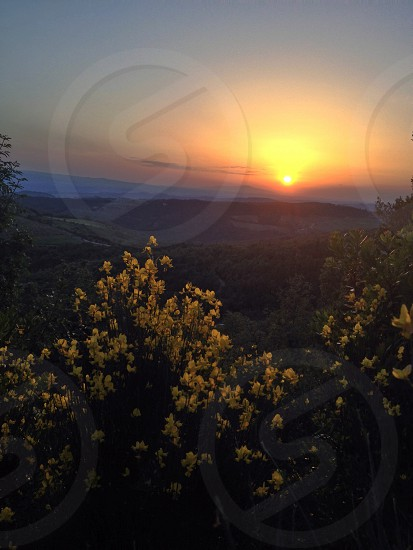 patch of yellow flowers during orange sunset photo