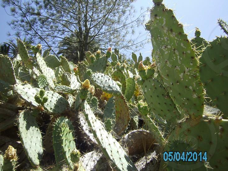 Cactus; Landscapes; Plants; Desert photo