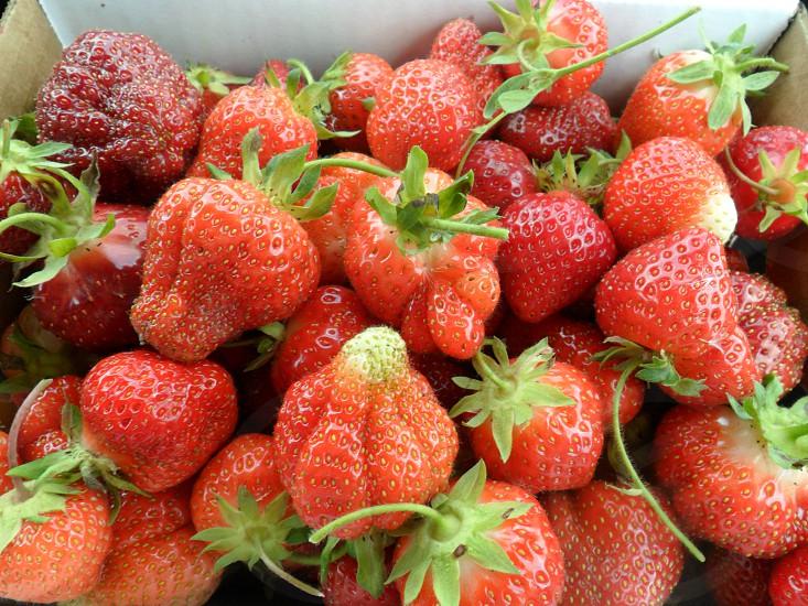 Freshly picked juicy organic strawberries! photo