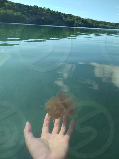 stingless jellyfish photo