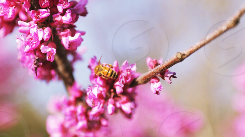 Spring bee flowers nature canon summer photo