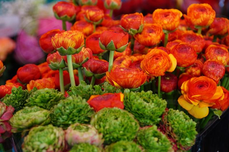 Flower market - Nice France photo