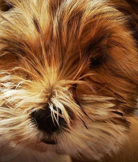 close up photography of medium coated tan dog photo