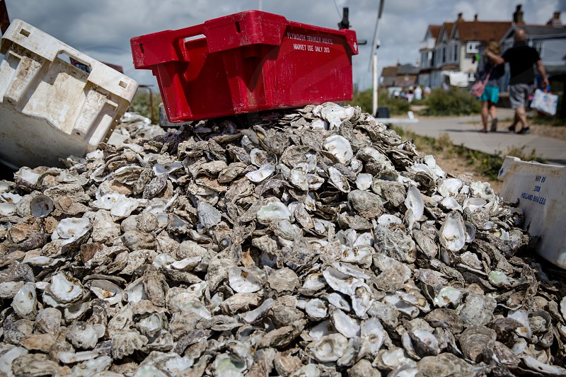 Oyster Shells photo