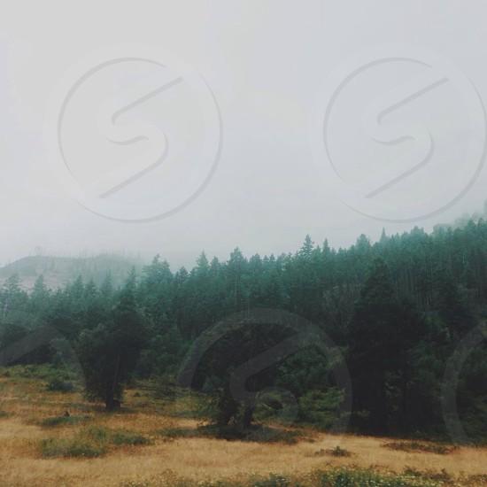 green pine trees photo