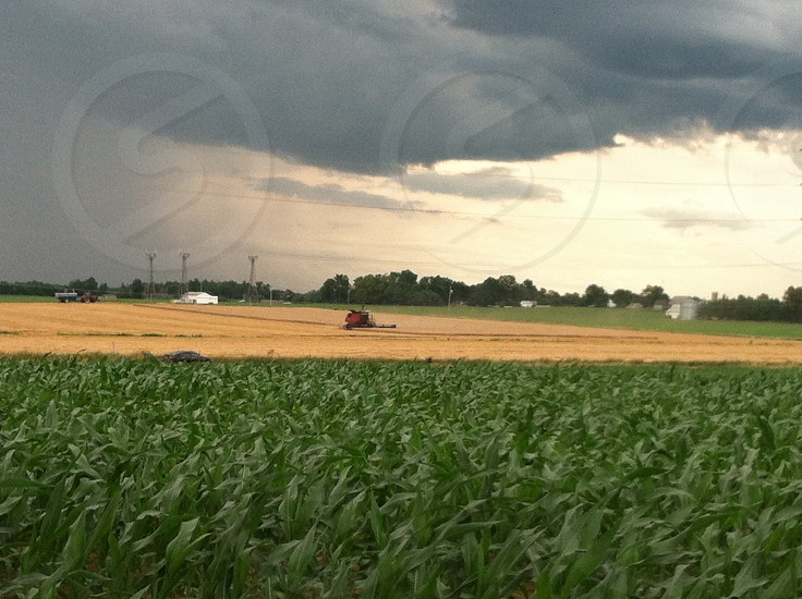 Tractor Combine Corn Indiana Field Harvest Agriculture Work heavy  Machinery Red Green Golden Weather Clouds Summer Farm photo