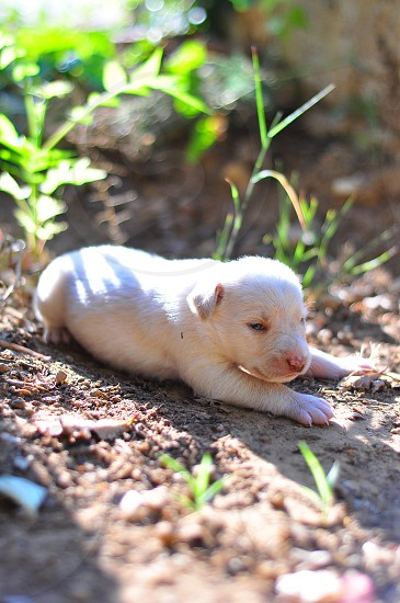 Puppy exploring (12days old) photo