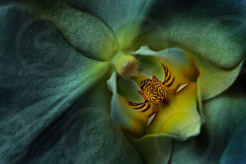 yellow blue and red exotic orchid close up photo