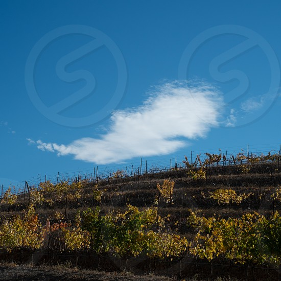Winery under a cloud! photo