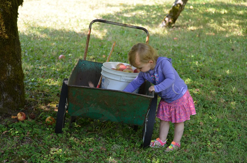 blonde toddler girl leaning into a green metal wagon with a white bucket of apples photo