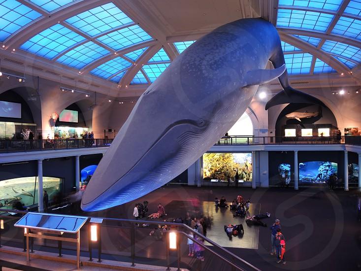 gray whale decor inside museum photo