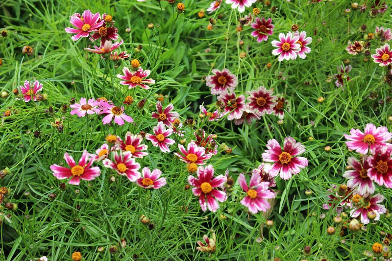 Flowers gardenbloombrightcolours photo