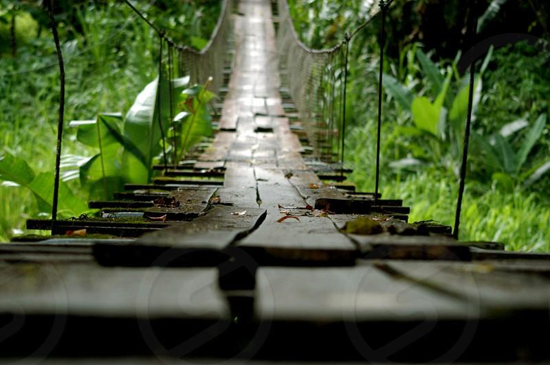 wood string suspension bridge photo