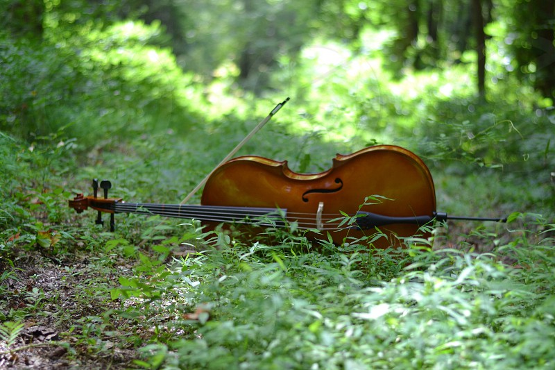 Cello in woods bow green grass leaves trees dirt peaceful relaxing strings instrument photo