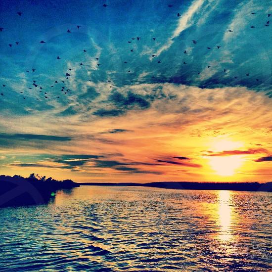 Pecan Island Louisiana photo