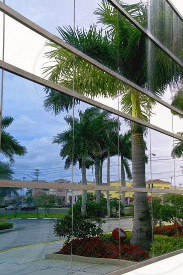 building windows with palm trees and buildings in reflection photo
