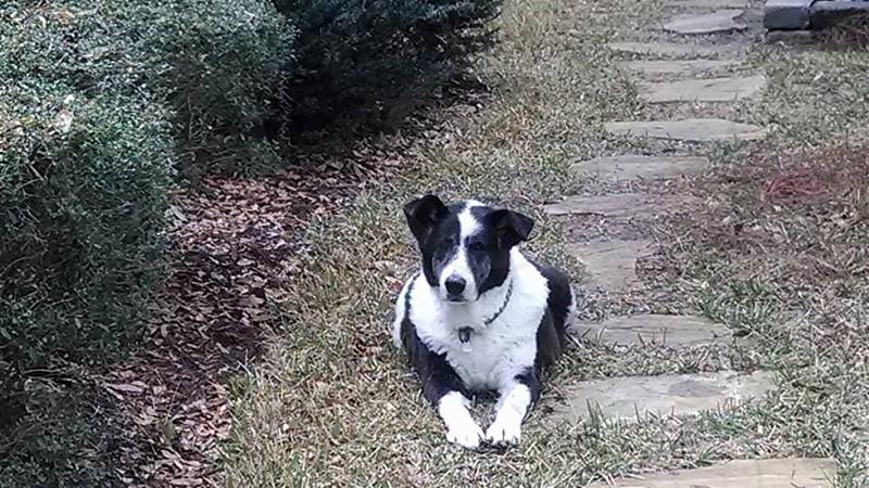 The Best Dog photo