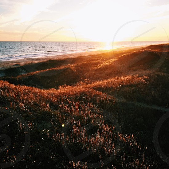 brown grass on hill in sunset photo
