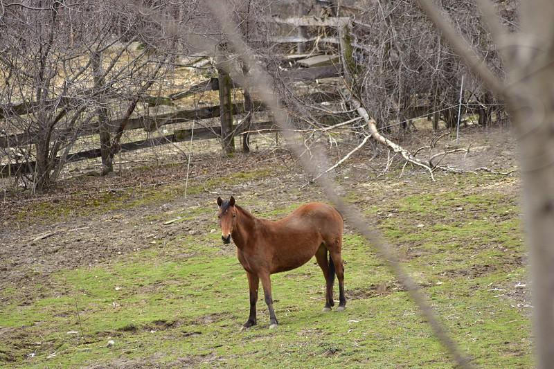 Pet portrait horse  photo