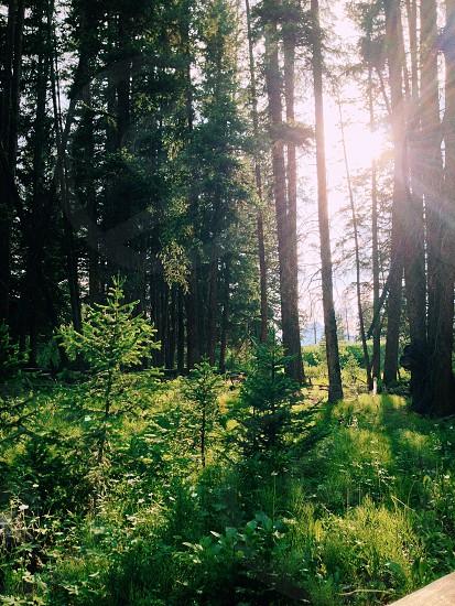 sunlight rays through green trees photo