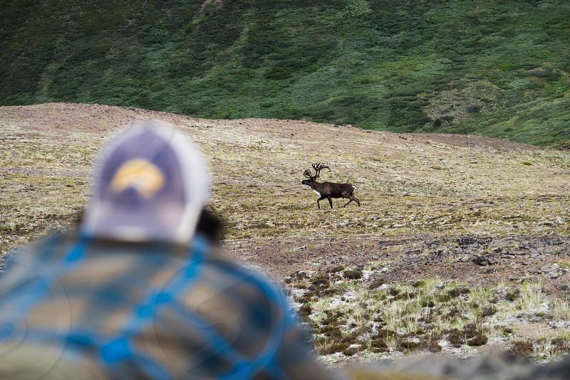 Young caribou buck Mt. Edziza Provincial Park photo