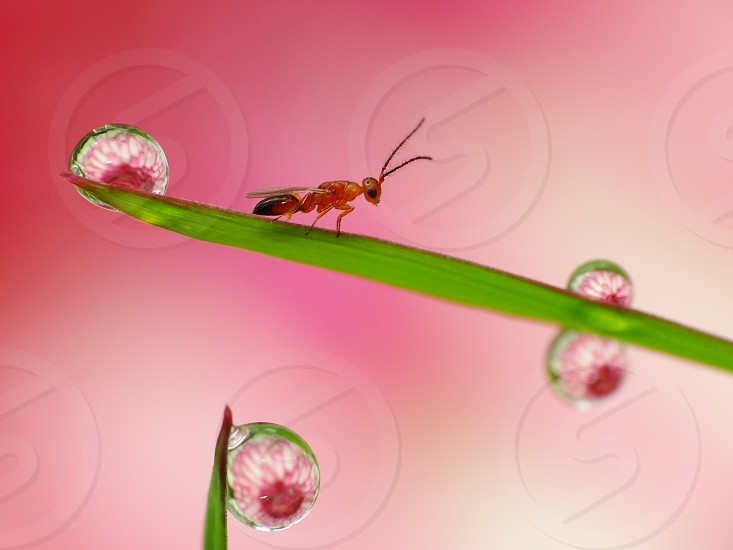 Reflection of flower in side dew drops remain on grass in the morning                        photo