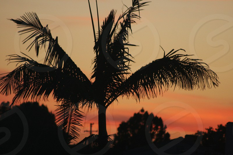 A beautiful sunset in California photo