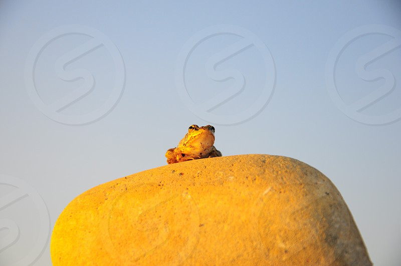 brown frog on brown rock under blue sunny sky photo