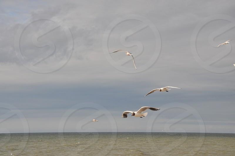 sky freedom flight seagull bird photo